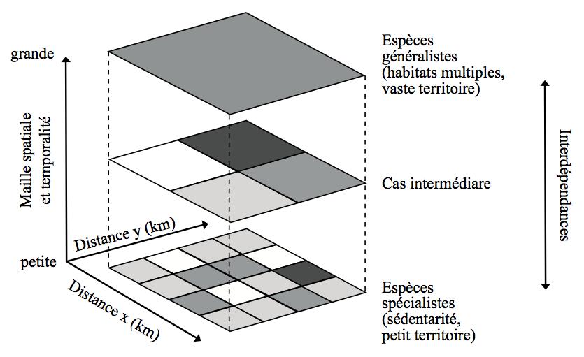 Figure 2. Des habitats, temporalités et interdépendances multiscalaires. Adapté de Gunnell [17], d'après Kolasa [18] et Turner et al [19].